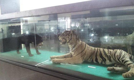Wild Animals Picture Museum Adityawarman Padang Tripadvisor Musium Kota
