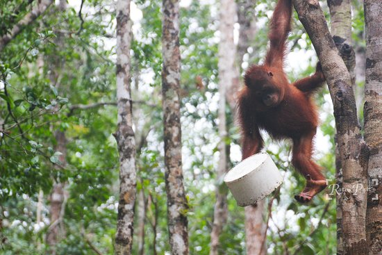 10 Palangkaraya 2018 Photos Eco Tours Bukit Doa Karmel Tangkiling