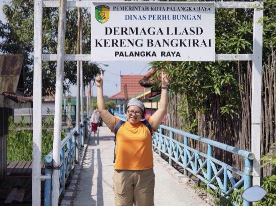 River Plant Sabangau Picture Sebangau National Park Central Kalimantan Photo0