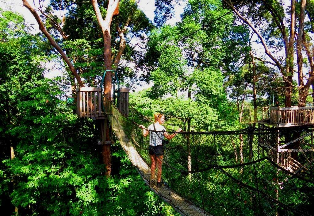 7 Wisata Tersembunyi Kalimantan Tengah Cocok Traveller Nyaru Menteng Orangutan