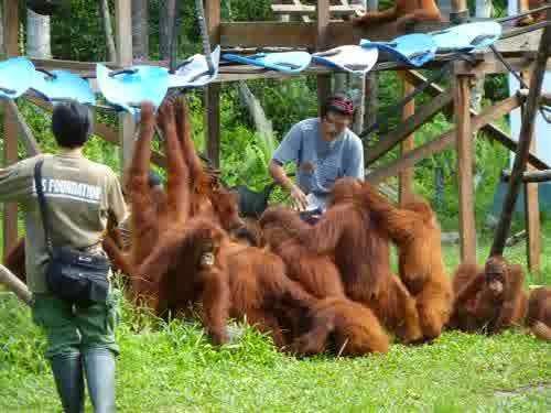 Alam Arboretum Nyaru Menteng Wisata Penangkaran Utan Kota Palangkaraya