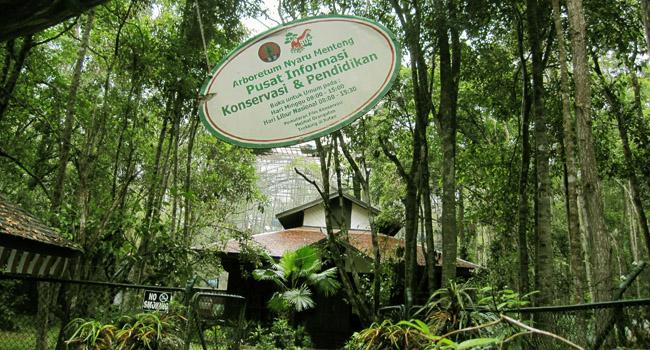 Arboretum Nyaru Menteng Kalimantan Tengah Borneo Penangkaran Utan Kota Palangkaraya