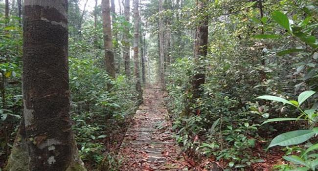 Arboretum Nyaru Menteng Kalimantan Tengah Borneo Pengkaran Orangutan Penangkaran Utan