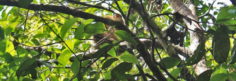 Arboretum Nyaru Menteng Tunawisma Penangkaran Utan Kota Palangkaraya