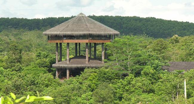 Bos Samboja Lodge Getborneo Kalimantan Timur Penangkaran Utan Nyaru Menteng
