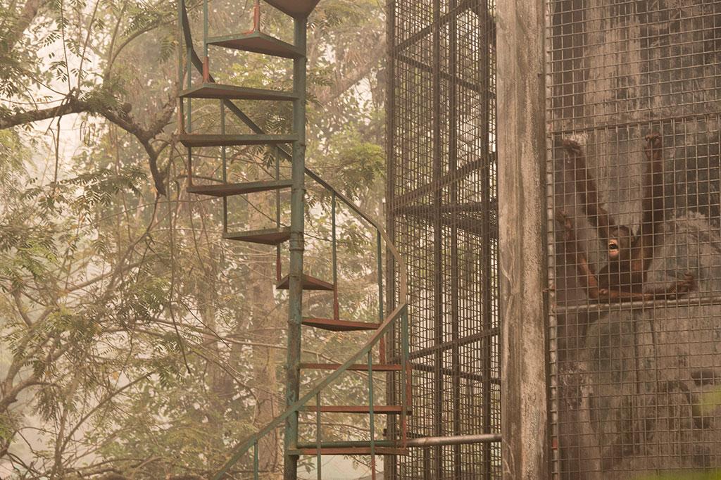 Catatan Perjalanan Kabar Palangkaraya Kondisi Penangkaran Orangutan Nyaru Menteng Sumber