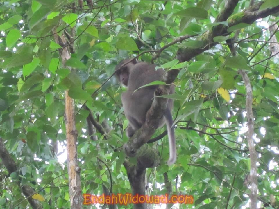 Catatan Perjalanan Kabar Palangkaraya Menyaksikan Orangutan Diperbolehkan Hari Ahad Pukul