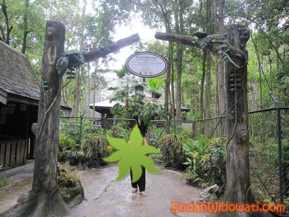 Catatan Perjalanan Kabar Palangkaraya Penangkaran Dikelola Oleh Yayasan Borneo Orangutan