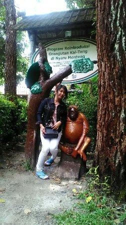 Kawasan Arboretum Nyaru Menteng Palangkaraya Indonesia Review Penangkaran Utan Kota