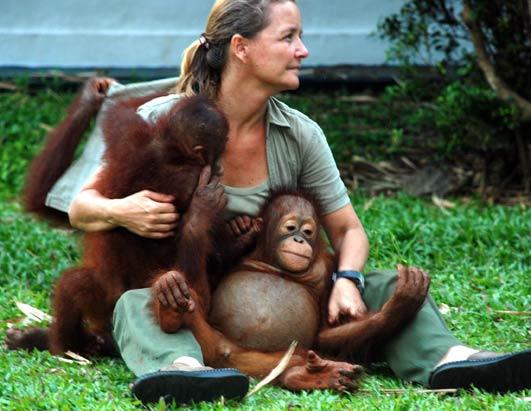 Nyaru Menteng Pusatnya Reintroduksi Orangutan Kalimantan Tengah Bias Melihat Bagaimanan