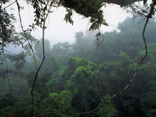 Objek Wisata Kal Teng Arboretum Nyaru Menteng Sebuah Hutan Terdapat