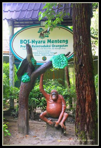 Penangkaran Buaya Neirarien Arboretum Nyaru Menteng Kalimantan Tengah Http Www