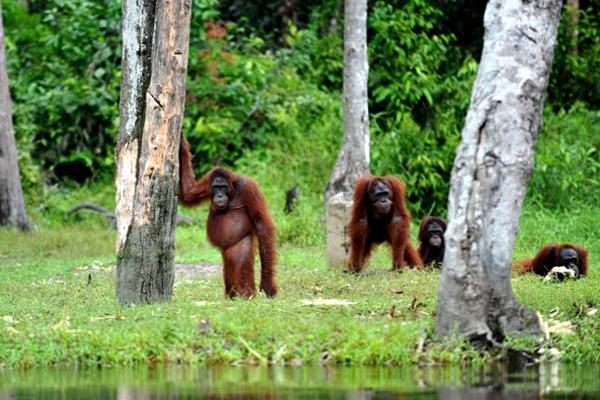 Samma Menjelajah 7wonders Borneo Daihatsu Terios Palangkaraya Ibu Kota Provinsi