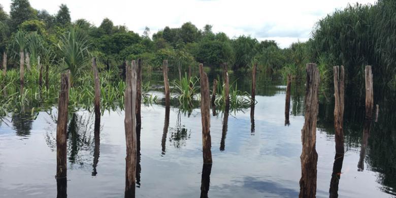 4 Alasan Berkunjung Taman Nasional Sebangau Kalteng Kompas Kalimantan Tengah