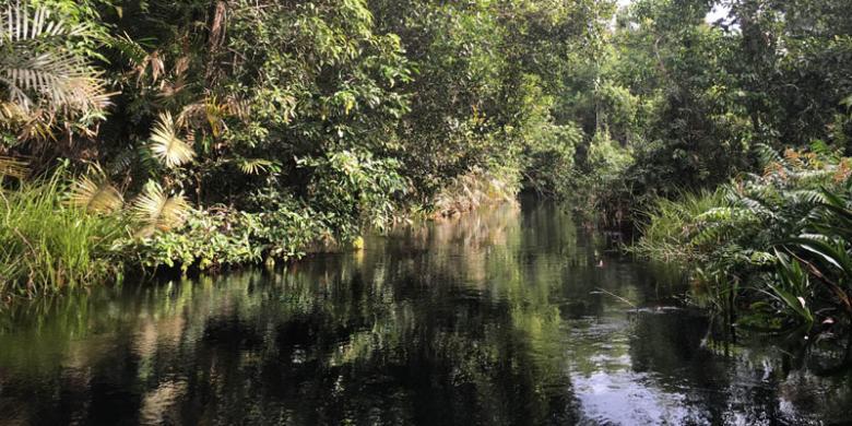 4 Alasan Berkunjung Taman Nasional Sebangau Oleh Sri Anindiati Nursastri