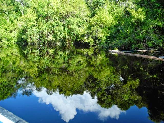 Alvonso Blog Menyusuri Sungai Koran Airnya Berwarna Hitam Taman Nasional