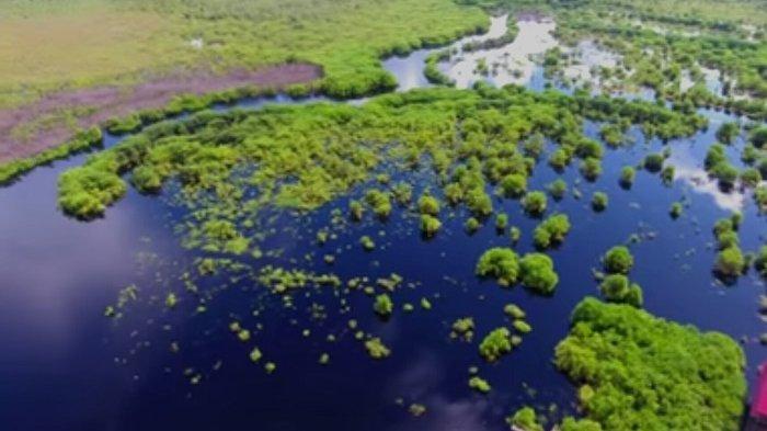 Aman Hilang Sungai Yuni Ari Tak Sadar Buaya Mengintai Sebangau