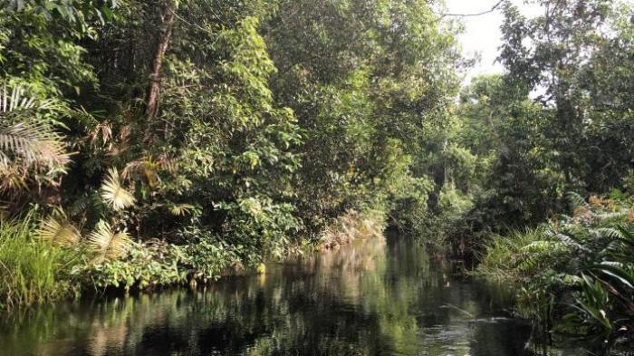 Asyiknya Menelusuri Sungai Hitam Tengah Hutan Kalimantan Tribun Taman Nasional