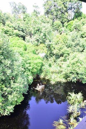 Balai Taman Nasional Sebangau Kalimantan Palangkaraya Indonesia Kota