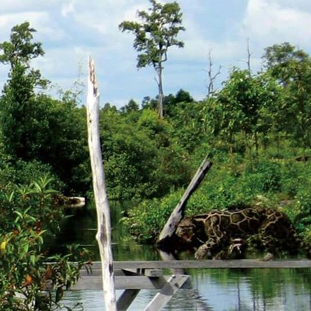 Balai Taman Nasional Sebangau Kalimantan Palangkaraya Indonesia Review Kota