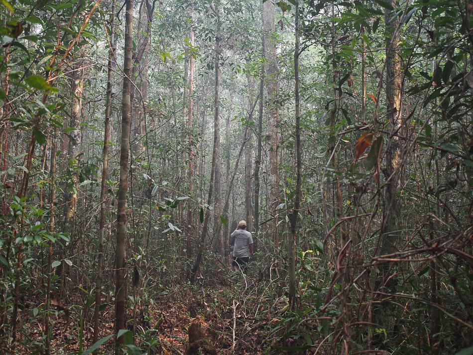 Bertemu Utan Liar Taman Nasional Sebangau Wira Nurmansyah Hutan Kota