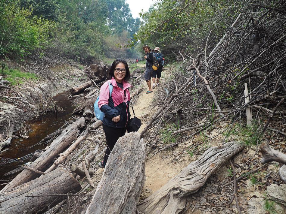 Bertemu Utan Liar Taman Nasional Sebangau Wira Nurmansyah Kemarau Kota