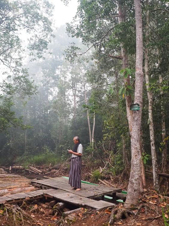 Bertemu Utan Liar Taman Nasional Sebangau Wira Nurmansyah Visitor Camp