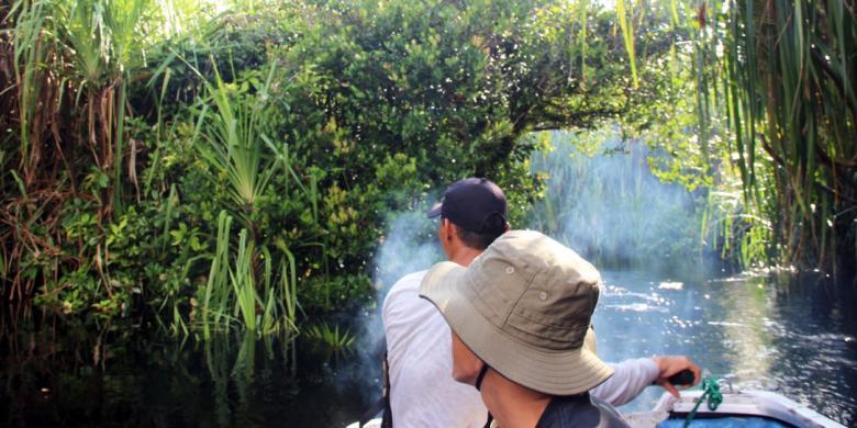 Istimewanya Wisata Taman Nasional Sebangau Panduan Jalur Reptil Tn Terletak