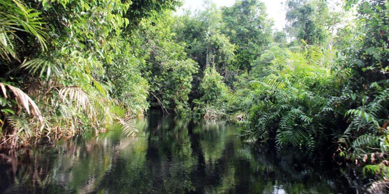 Istimewanya Wisata Taman Nasional Sebangau Panduan Lengkapnya Kota Palangkaraya