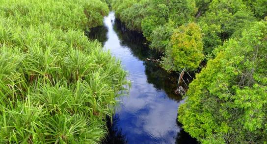 Keindahan Panorama Taman Nasional Sebangau Layak Dikunjungi Kota Palangkaraya