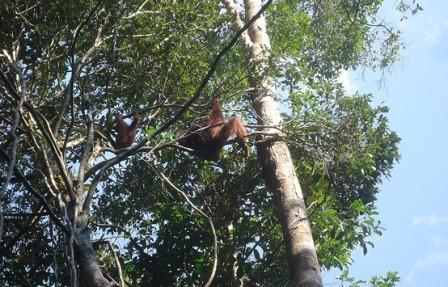 Keindahan Wisata Alam Palangkaraya Membuat Terkesan Taman Nasional Sebangau Kota