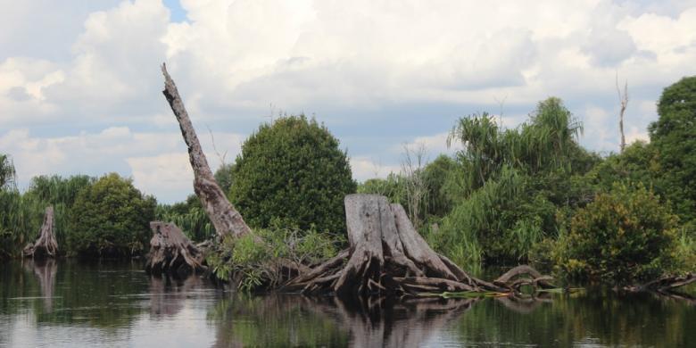 Manakah Taman Nasional Sebangau Kompas Secara Administratif Masuk Tiga Wilayah