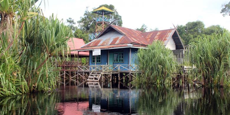 Menyusuri Hitam Misterius Tengah Kalimantan Kompas Taman Nasional Sebangau Kota
