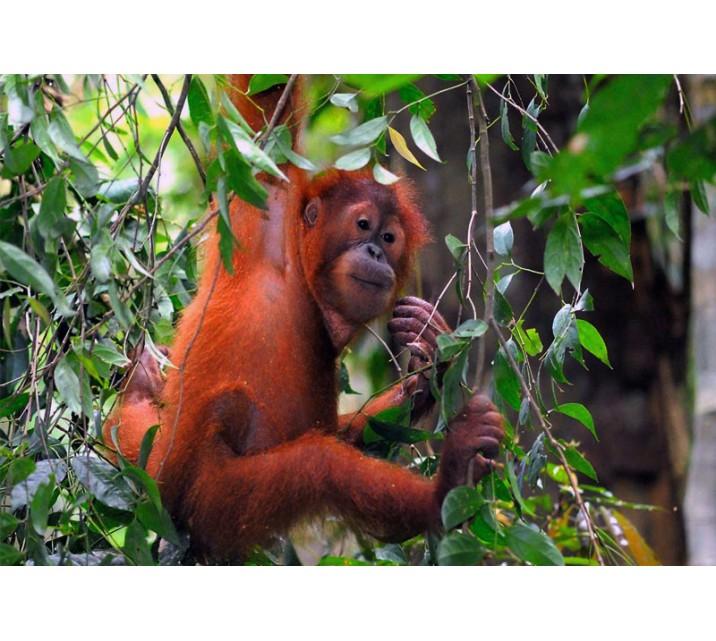 Nasional Sebangau Hutan Tropis Murni Taman Kota Palangkaraya