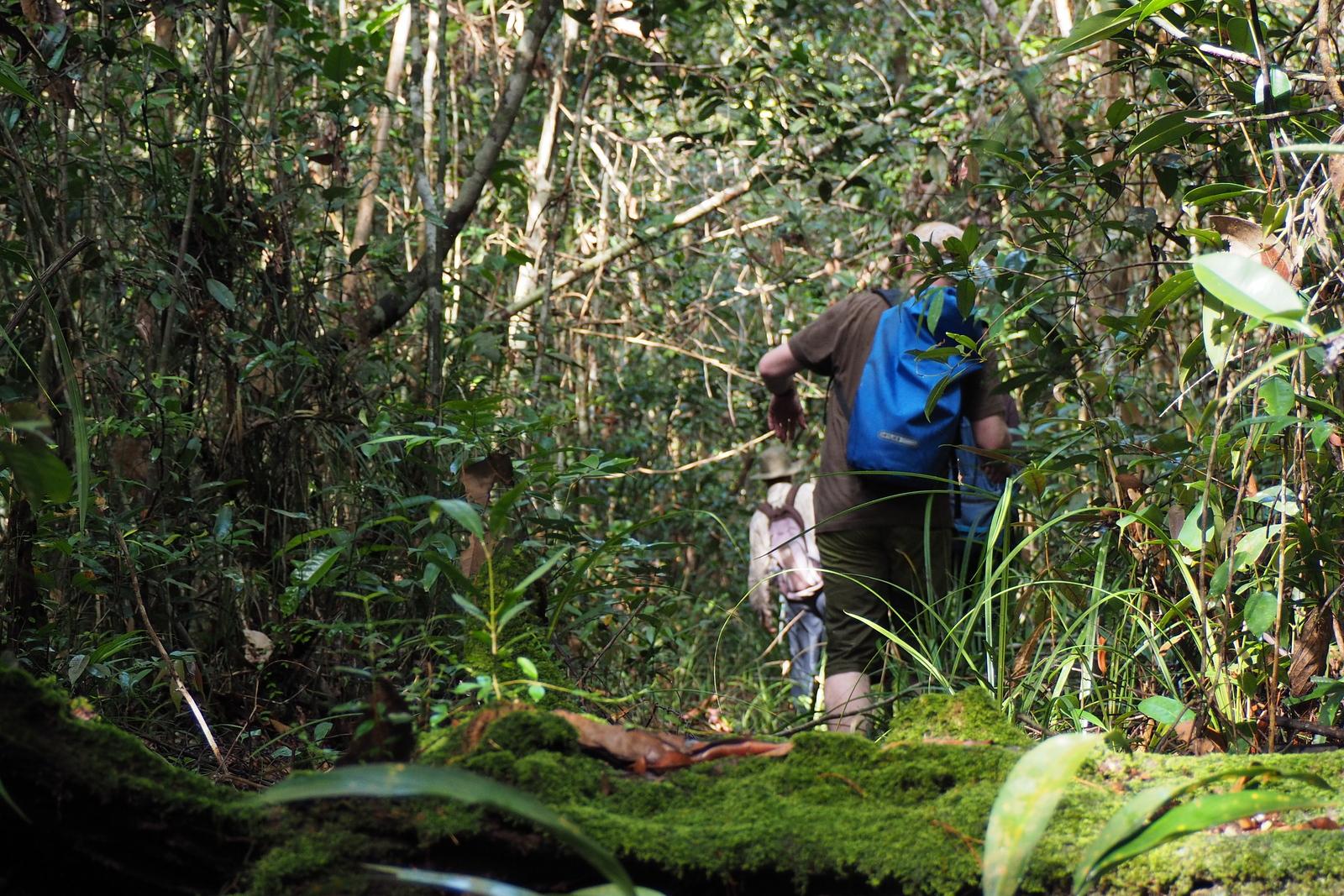 Paket Trekking Taman Nasional Sebangau Borneo Tour Kota Palangkaraya