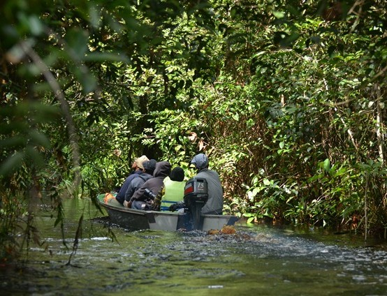 Taman Nasional Sebangau Palangkaraya Kalimantan Dian Blog Kota