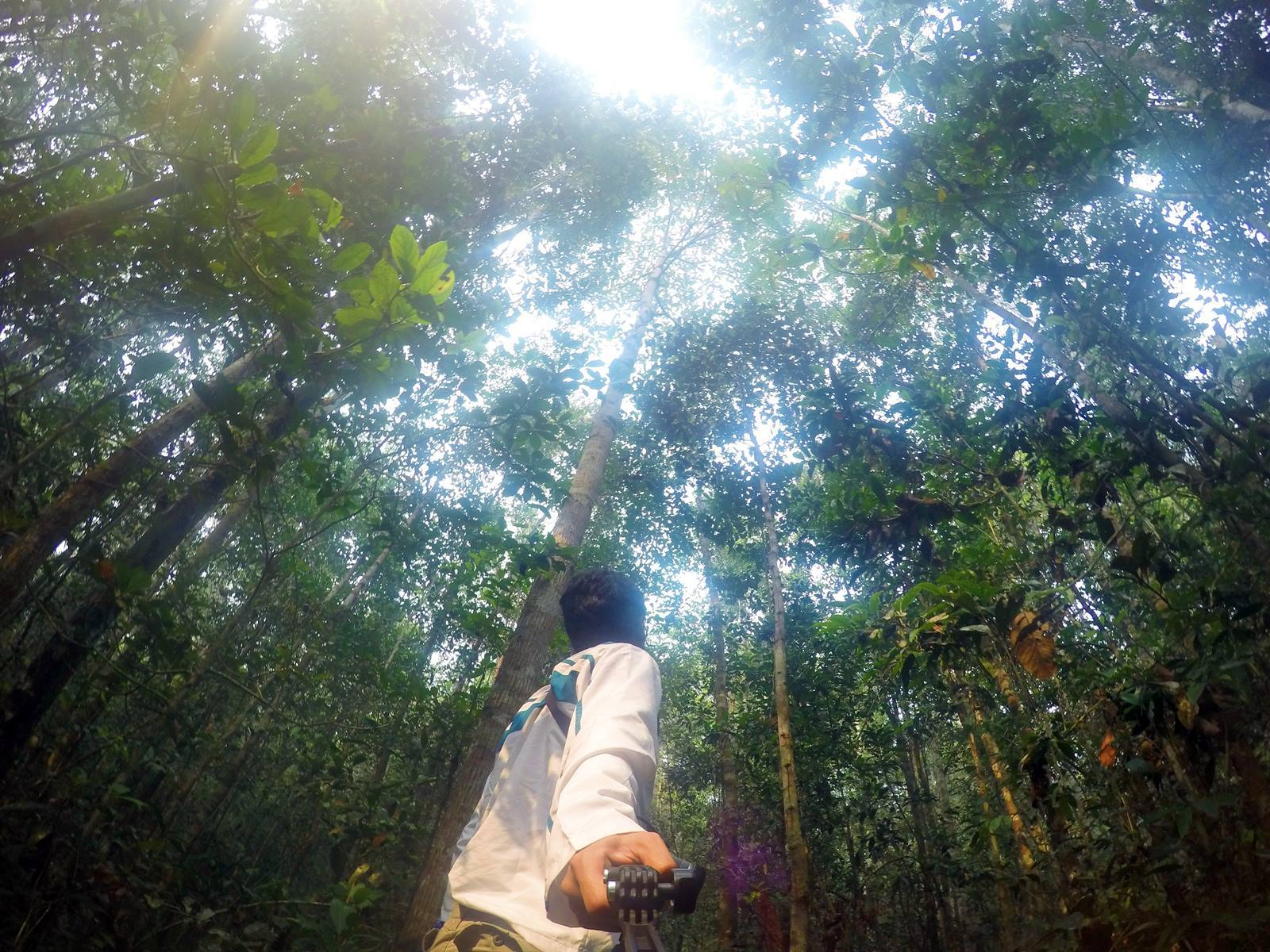 Taman Nasional Sebangau Rumah Utan Kalimantan Catperku Kota Palangkaraya