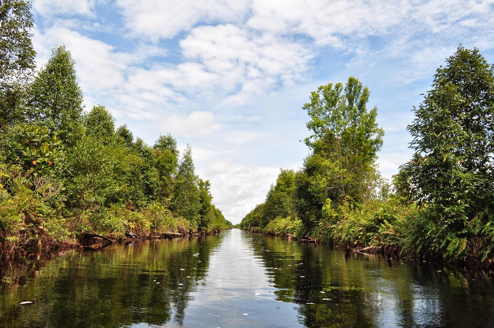 Taman Nasional Sebangau Sensasi Menelusuri Hutan Gambut Kalimantan Tengah Kota