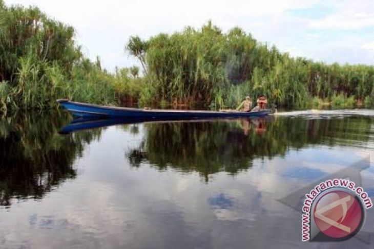 Taman Nasional Sebangau Zaman Kayu Hingga Restorasi Antara Kota Palangkaraya