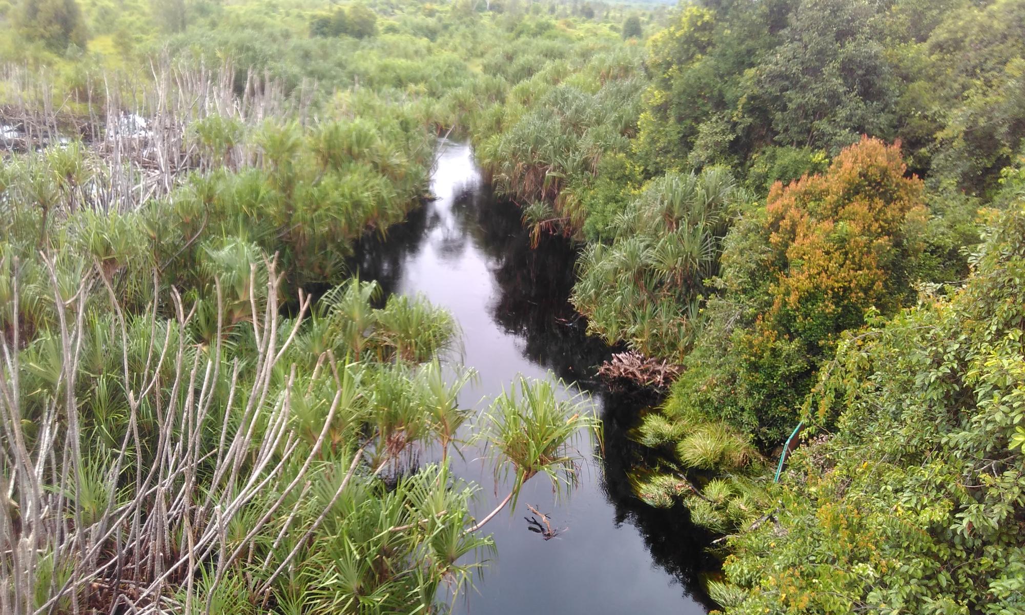 Tersesat Labirin Taman Nasional Sebangau Fairyandfunny Posted July 20 2017