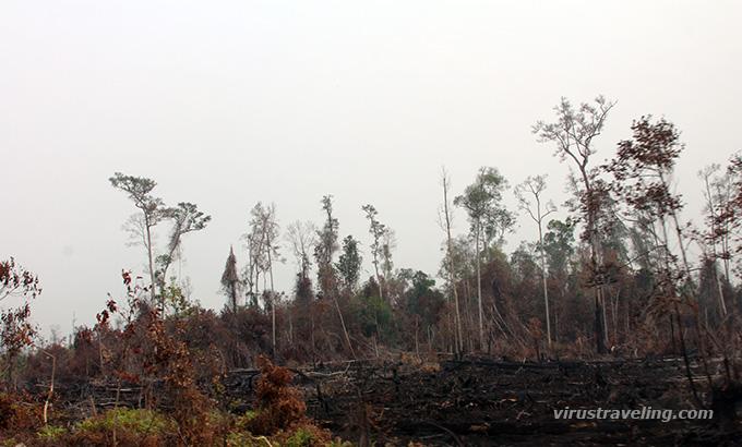 Trekking Hutan Taman Nasional Sebangau Virustraveling Jalanan Kalimantan Kebakaran Kota
