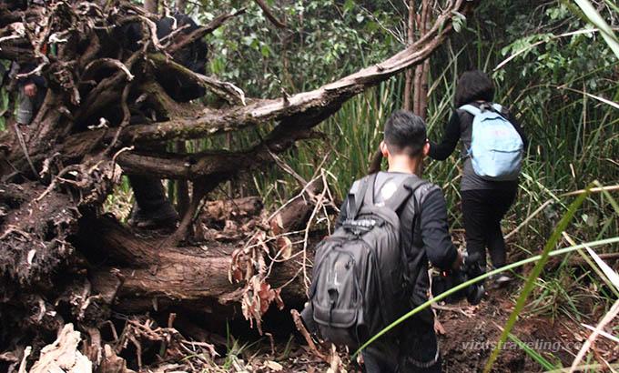 Trekking Hutan Taman Nasional Sebangau Virustraveling Kota Palangkaraya