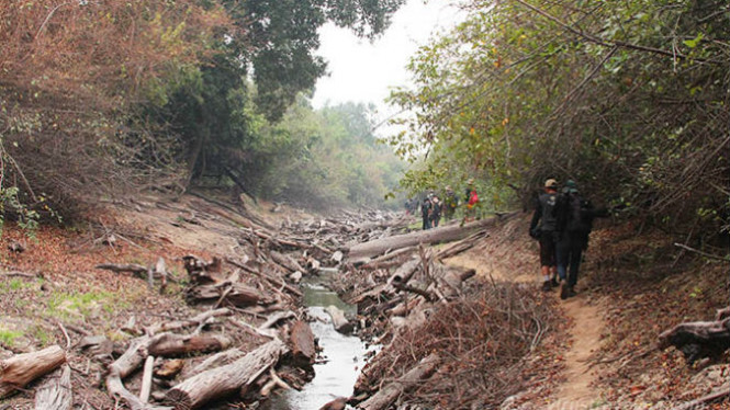 Trekking Hutan Taman Nasional Sebangau Viva Image Title Kota Palangkaraya