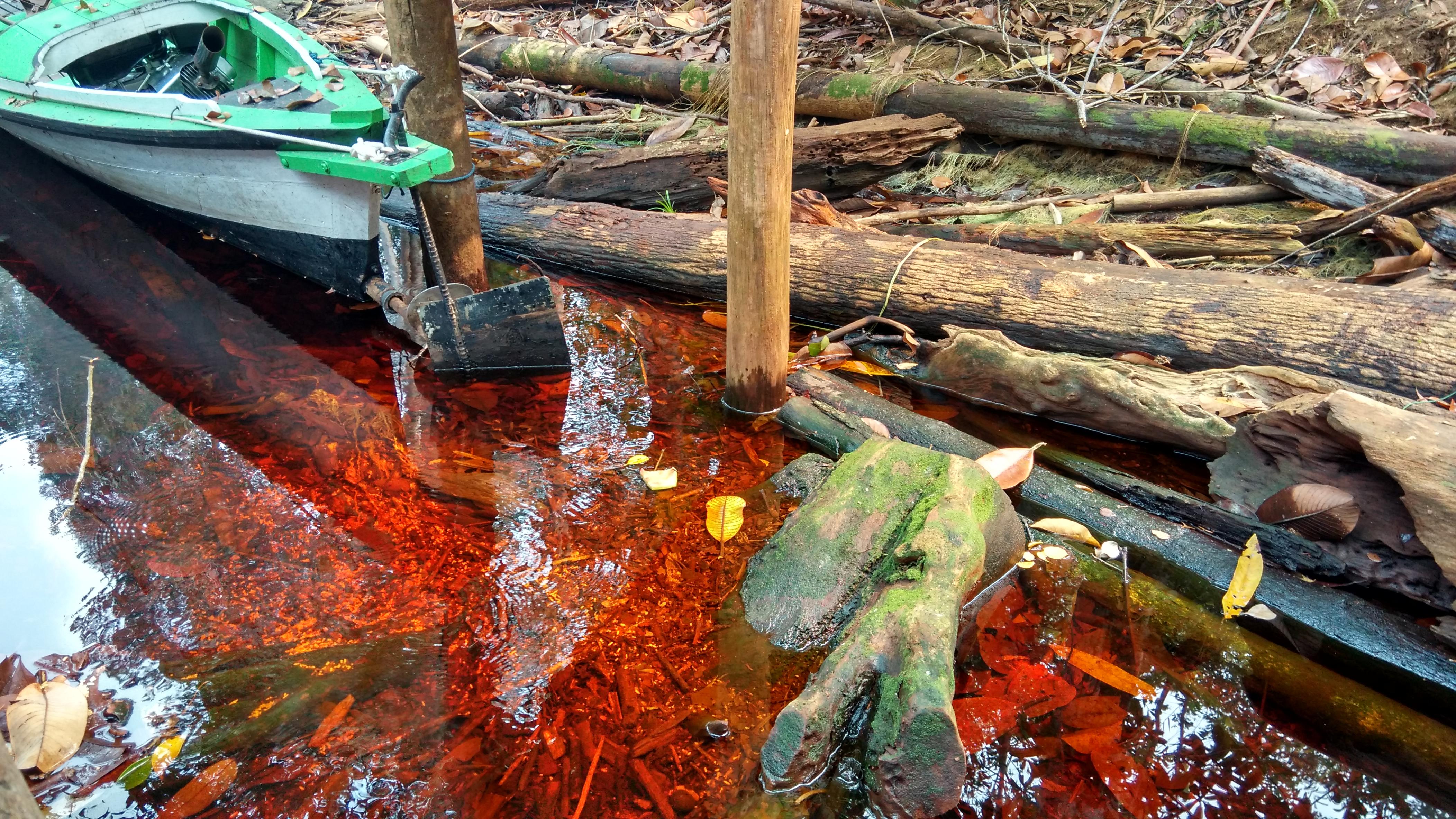 Trekking Taman Nasional Sebangau Demi Melihat Orangutan Senja Air Kawasan