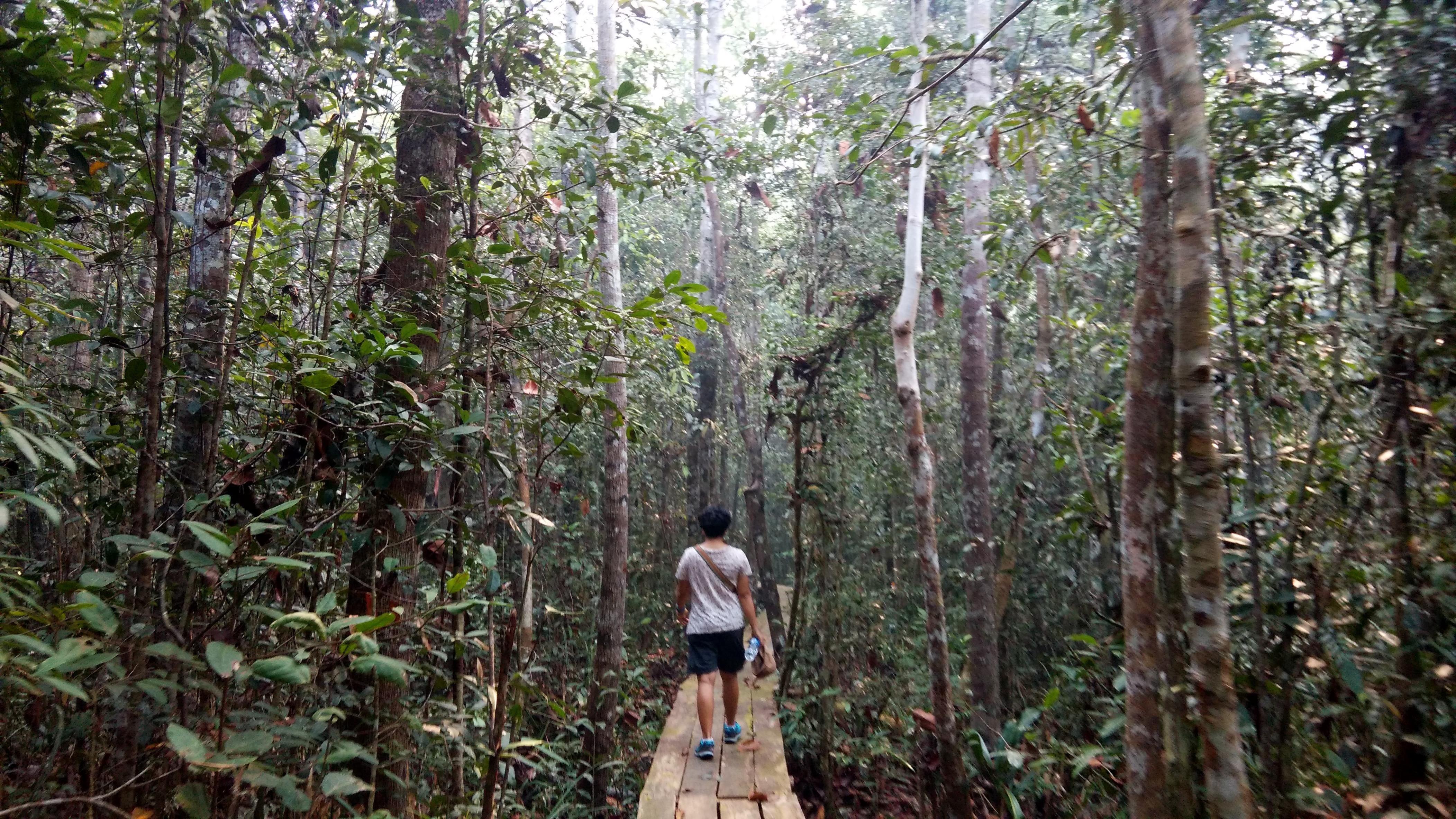 Trekking Taman Nasional Sebangau Demi Melihat Orangutan Senja Kak Vira