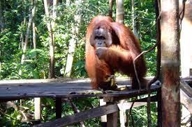 7 Tempat Wisata Kalimantan Tengah Menarik Majalah Taman Nasional Tanjung