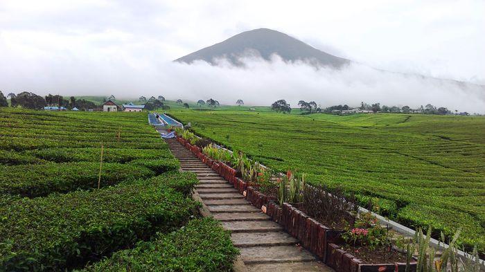 Wisata Alam Indonesia 28 Tempat Terpopuler Palembang Gunung Dempo Sebuah
