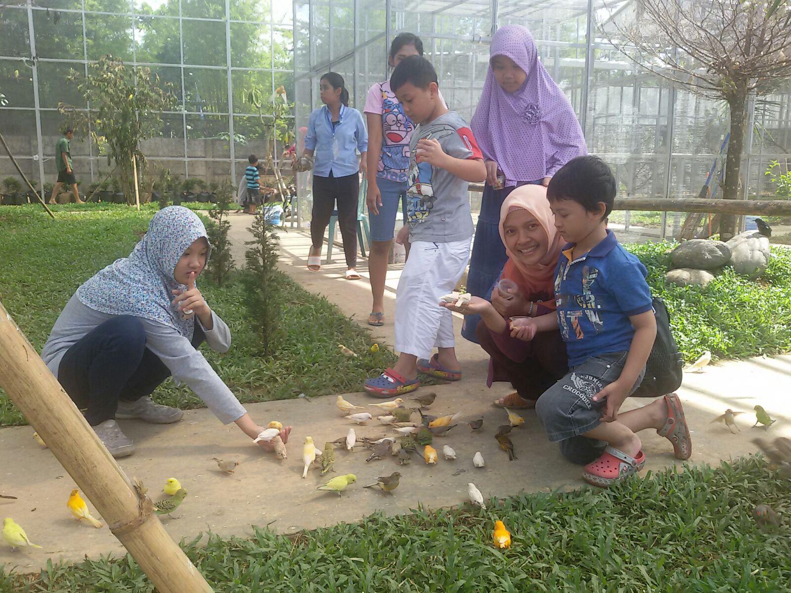 Qolbi Qutbi Palembang Bird Park Marmut Tiket Masuk Seharga 50