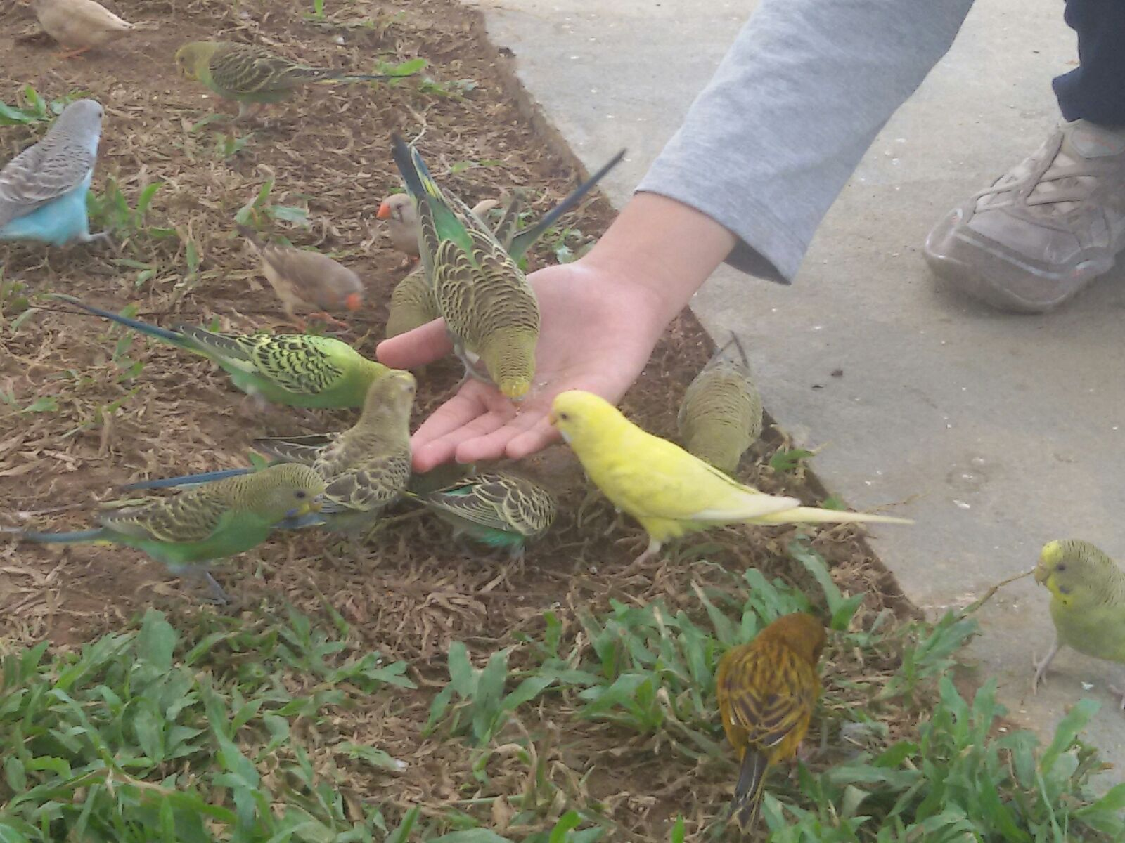 Qolbi Qutbi Palembang Bird Park Taman Pelangi Kota
