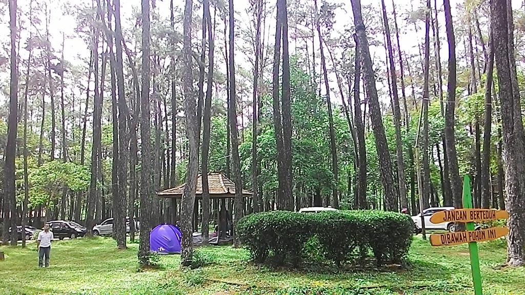 Hutan Wisata Punti Kayu Paru Kota Palembang Indah Taman Alam